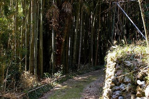 山道を歩く