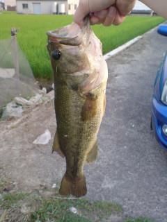 bass_03.jpg