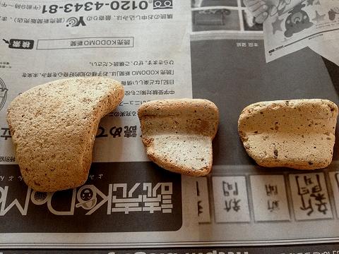 竜宮の磯の土器片
