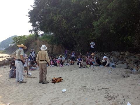 宍喰海岸の品評会