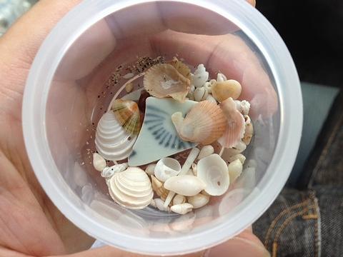 微小貝など
