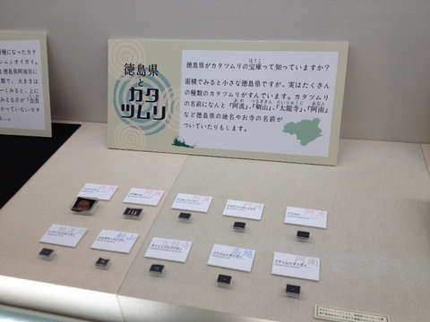 徳島県とカタツムリ