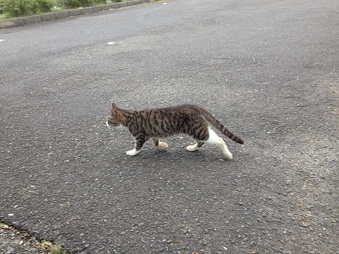 展望台の猫