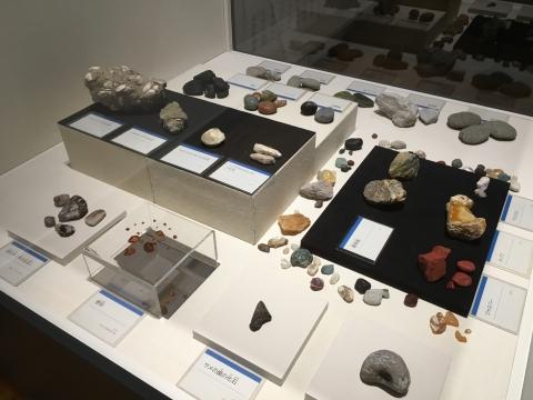 化石や鉱物