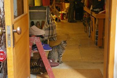 雑貨屋と猫