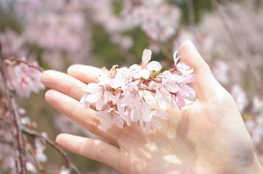 桜と相方の手