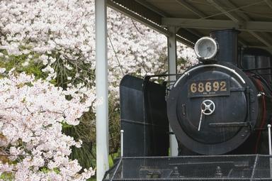 桜と機関車